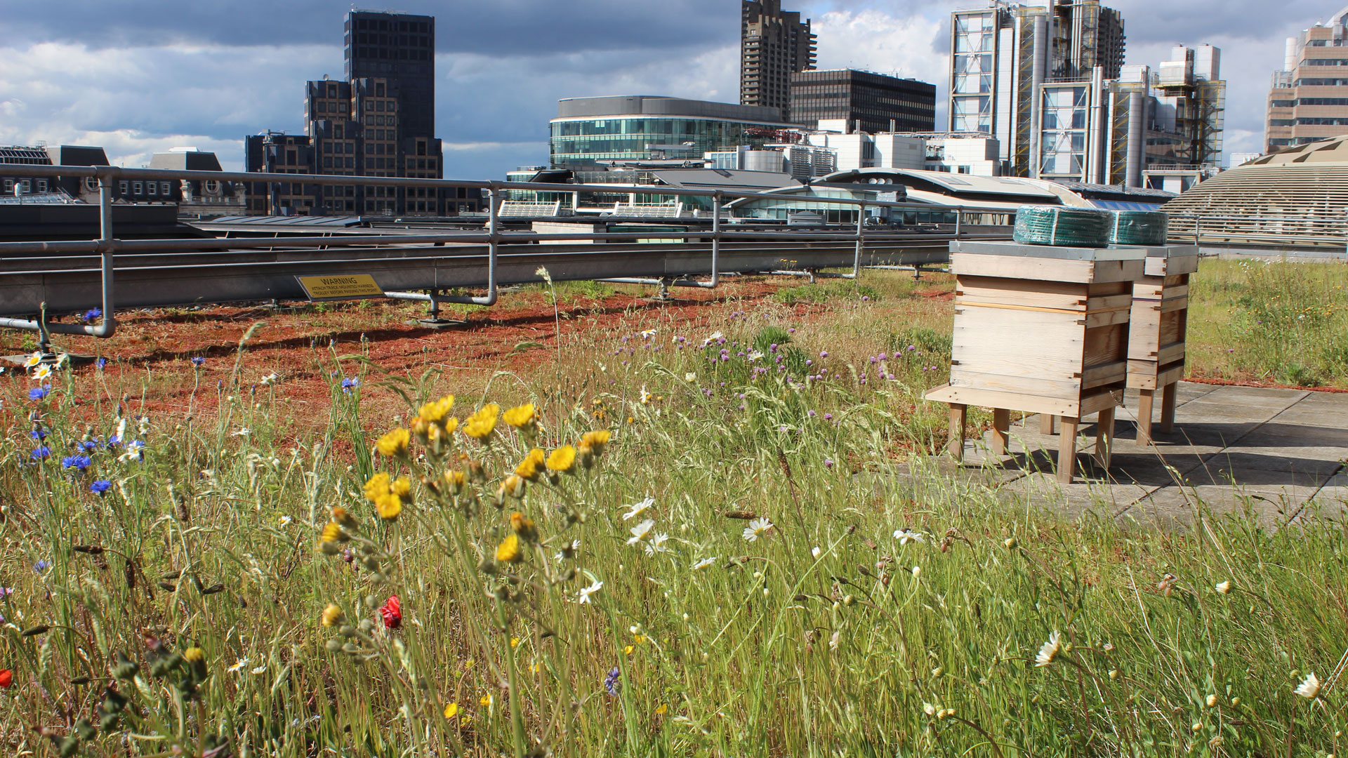 Rooftop meadow. Photo: Urbio.